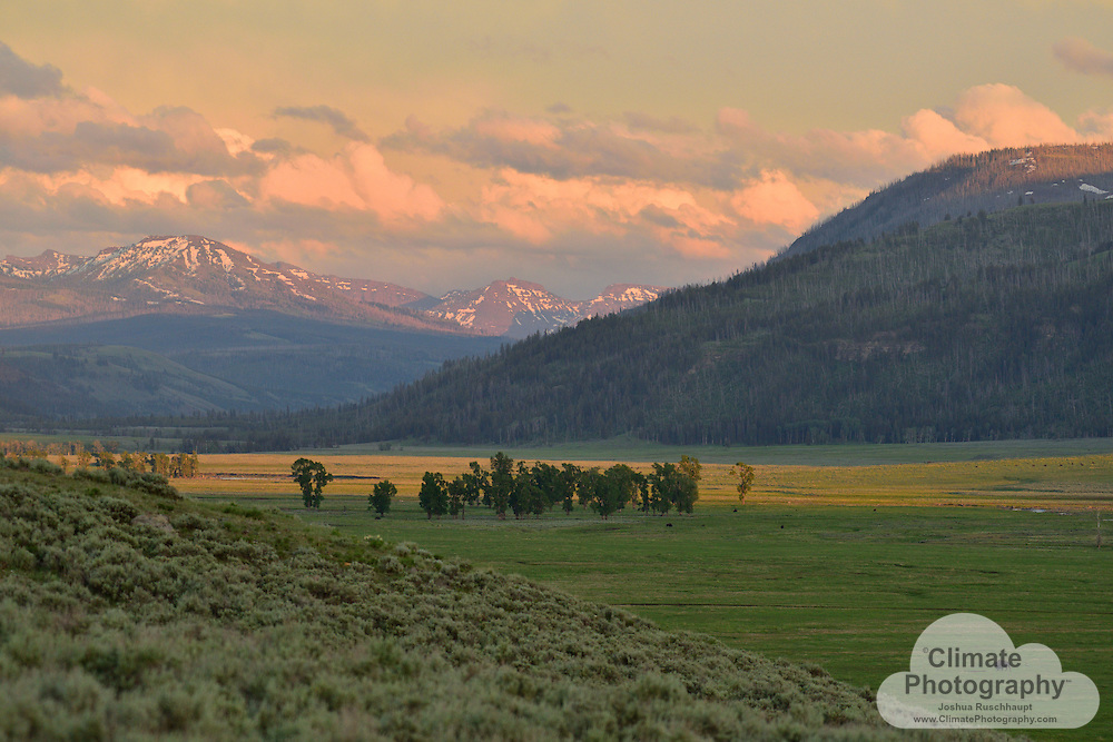 A bison grazes naturally in Lamar Valley, Yellowstone National Park, Wyoming.