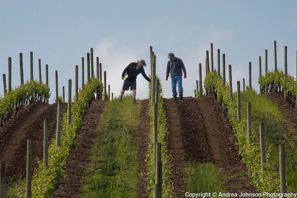 Allen Holstein & Jaime Cantu at Argyle's Lone Star Vineyard, Eola Hills AVA, Willamette Valley, Oregon