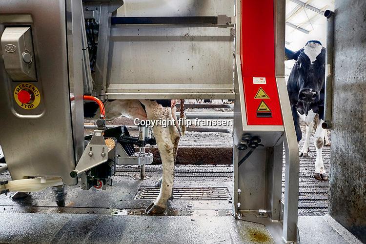 Nederland, Groesbeek, 10-9-2016 Een melkveebedrijf beschikt over de modernste melkmachine, melkrobot . In de nieuwe en moderne stal kunnen de koeien zich vrij bewegen en laten zij zich melken bij een van de drie melkstations . Een computergestuurd systeem reinigt eerst de spenen waarna via laserlicht de trechters hun weg naar de speen vinden. Dit doet de koe drie tot vier keer per dag, met een verhoging van de totale melkproductie tot gevolg . Foto: Flip Franssen