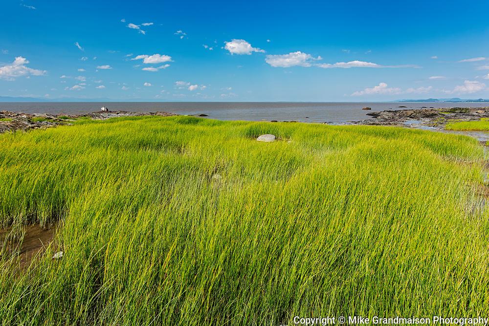 Marsh along the St. Lawrence River<br />Saint-Roch-des-Aulnaies<br />Quebec<br />Canada