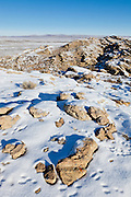 Rabbit tracks in snow around rock outcrop during winter in the Bighorn Basin of Wyoming