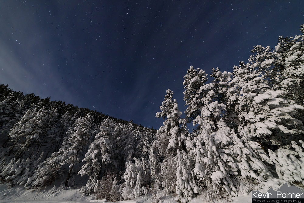 It was a beautiful wintry night in the Bighorn Mountains. Most of the snow from the previous day had fallen off the trees after a sunny day. But since this part of the forest remained in the shade, it was still looking like a winter wonderland in the moonlight.