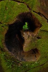 Fallen Tree Detail, Barnes Point, Olympic National Park, Washington, US