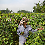 INDIVIDUAL(S) PHOTOGRAPHED: Liton. LOCATION: Narayanganj, Bangladesh. CAPTION: Liton smiles cheerily as he gather pods from bushes during his daily work at a farm in Bangladesh.