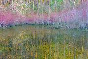 Lakeside vegetation, winter, Snake Lake Nature Preserve, Tacoma, WA, USA