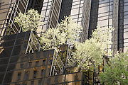 New York city detail Trump Tower fifth avenue with trees on the stepped facade
