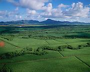 Sugar Cane, Kauai, Hawaii, USA<br />