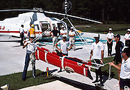 The Bottlenose Dolphin were transported from the Florida Keys to the aquarium in Orlando by helicopter in order to minimize their trauma.  Buena Vista, Florida
