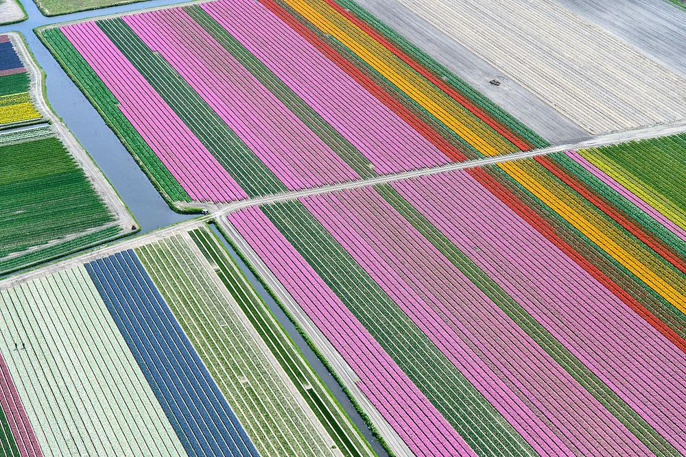 Nederland, Zuid-Holland, Bollenstreek, 09-04-2014; Bloembollenvelden tussen Noordwijkerhout, Lisse en Sassenheim.<br /> <br /> <br /> QQQ<br /> luchtfoto (toeslag op standard tarieven);<br /> aerial photo (additional fee required);<br /> copyright foto/photo Siebe Swart