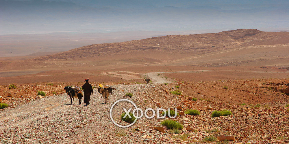 Man with donkey in barren landscape, Dades Valley, Morocco (November 2006)