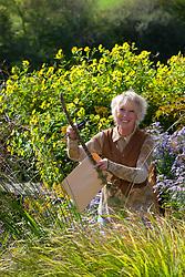 Carol Klein taking seed from Verbascum bombyciferum. Mullein