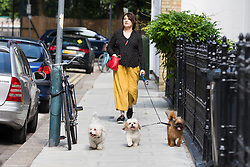 May 27, 2019 - London, London, UK - London, UK. Sarah Vine is seen leaving home with their three dogs today. Mr Gove officially announced that he will run for leadership of the Conservative Party yesterday following Prime Minister, Theresa May's resignation last week. (Credit Image: © Vickie Flores/London News Pictures via ZUMA Wire)