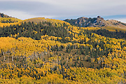 Mountain in southern Colorado covered with yellow Aspens.