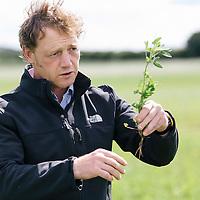 Agrovista UK Cover Crops Northumberland