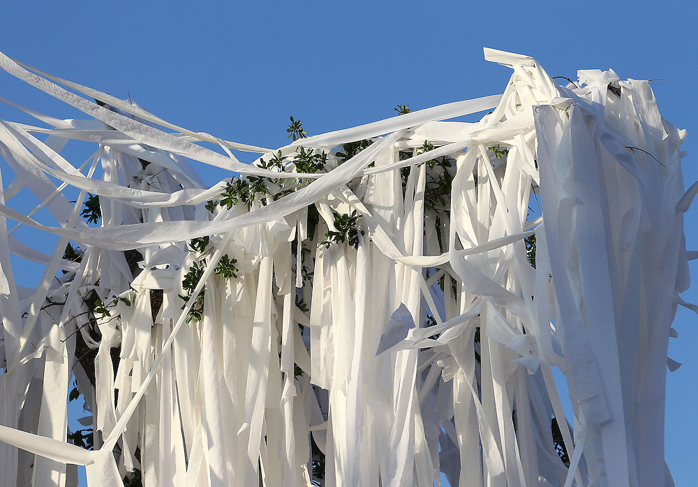 AUBURN, AL - APRIL 20:  General view of Auburn Oaks, rolled with toilet paper, at Toomer's Corner Celebration on April 20, 2013 in Auburn, Alabama.  (Photo by Mike Zarrilli/Getty Images)
