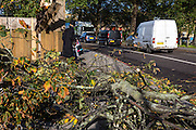 An Orthodox Jewish mans climbs over a large part of a tree snapped off on Upper Clapton road. The sever storm called St Jude is the worst to hit the Uk for years, it has caused sever damage to parts of the country with winds of up to 90mph.