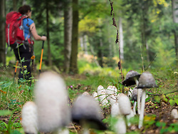 Woman on hiking tour passing by mushroom in the Northern Black Forest, Bad Wildbad, Baden-Württemberg, Germany