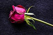 Dead Dried flower for making potpourri