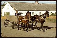 05: COLLECTIVE FARM HORSES, DAILY LIFE