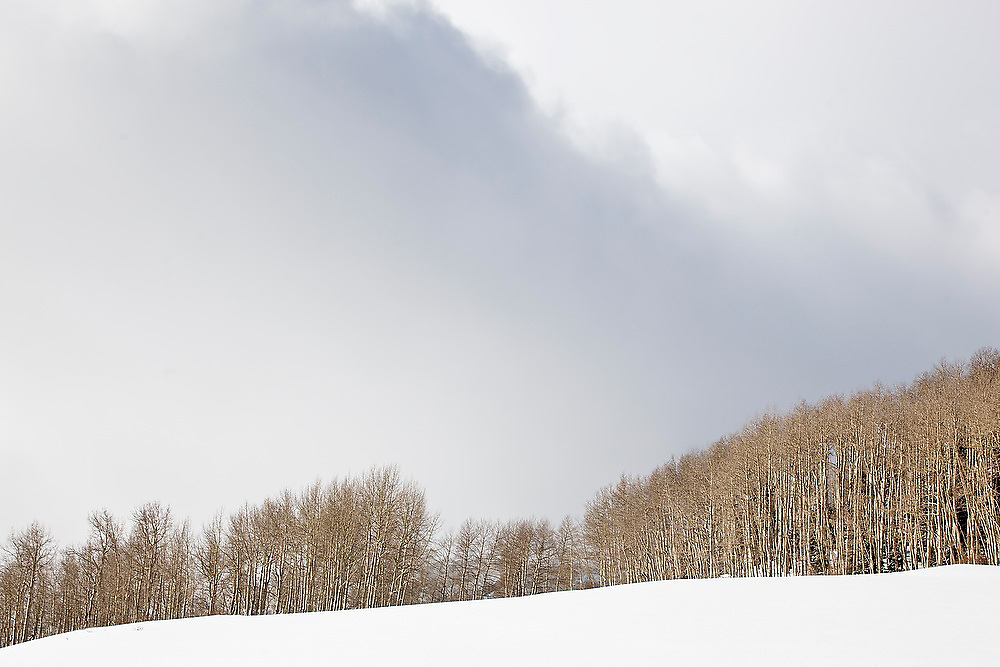 Dark clouds over large groves of aspen in Uncompahgre National Forest, Colorado.
