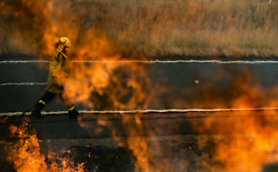 NEW SOUTH WALES, Nov. 11, 2019  A firefighter battles the flames during bushfires near Taree, New South Wales, Australia, Nov. 11, 2019..   A devastating start to the Australian bushfire season has prompted a state of emergency in the eastern state of New South Wales (NSW), with the country's largest city, Sydney bracing for ''catastrophic'' fire danger. .   On Monday, a state of emergency was declared for NSW, with exceptionally hot and windy conditions predicted for Tuesday, threatening to create an even bigger fire disaster than that which left three people dead last week. (Credit Image: © Bai Xuefei/Xinhua via ZUMA Wire)