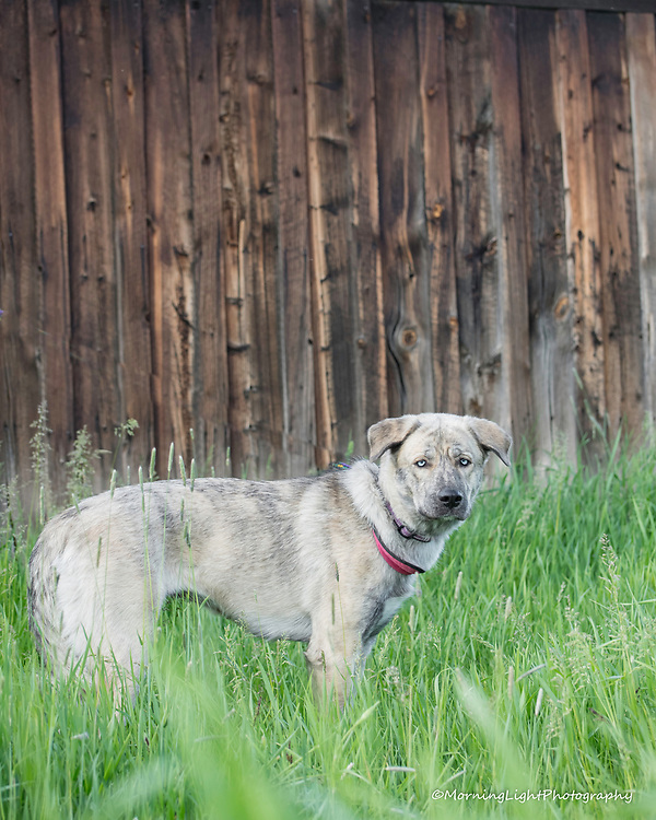 Pet Photography,Pet Photography, Morning Light Photography, Steamboat Springs Colorado