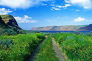 Image of an off-road trail overlooking the Columbia River and Wallula Gap in Wallula, eastern Washington, Pacific Northwest by Randy Wells