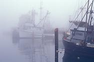 Commercial Fishing boats docked in marina in morning fog, Santa Barbara Harbor, Santa Barbara, Southern Coast, California