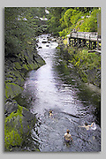 Ketchikan, Alaska. A southeast Port of Call in the Inside Passage, with a Tongass National Forest Creek rolling through it for summer relief.