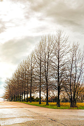 Bare Trees Line The Entrance To Francis Street in Wentzville, Missouri.