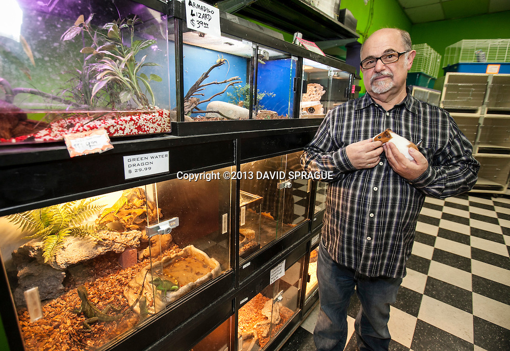 Ira Lippman, owner of Peggy Wood's Pet Emporium,  holds a guinea pig. The city of Burbank has banned the sale of puppies and kittens, hurting businesses like Peggy Wood's Pet Emporium. Shot Feb. 6th,  2013Photo by David Sprague ©2013