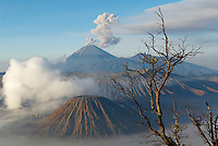 Indonesie. Île de Java. Volcans Bromo (Mont Bromo - 2392m) et Semeru (3676m) tôt le matin. // Indonesia. Java island. Bromo (2392m) and Semeru (3676m) volcanoes, early morning.