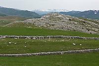 Pasture on Durmitor plateau, Durmitor National Park, Montenegro