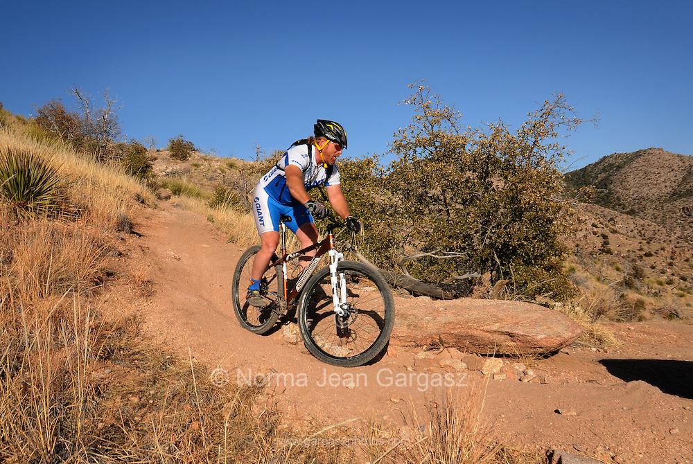 Youths ride mountain bikes on Bug Spring Trail, Mount Lemmon, Santa Catalina Mountains, Sonoran Desert, Tucson, Arizona, USA.