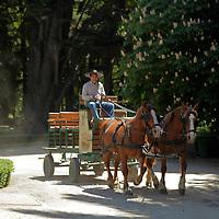 South America, Chile, Santiago. Horses of Casa Real Hotel and Santa Rita Winery.