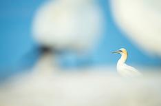 Saltee's Seabirds