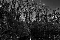 Cypress Swamp along Loop Road in Big Cypress National Preserve. Winter Nature in Florida. Image taken with a Leica T camera and 11-23 mm lens.