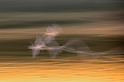 A long exposure captures the motion of several gulls flying over the water of Potholes Canal on their way to fish in Soda Lake in the Columbia National Wildlife Refuge in Washington state.