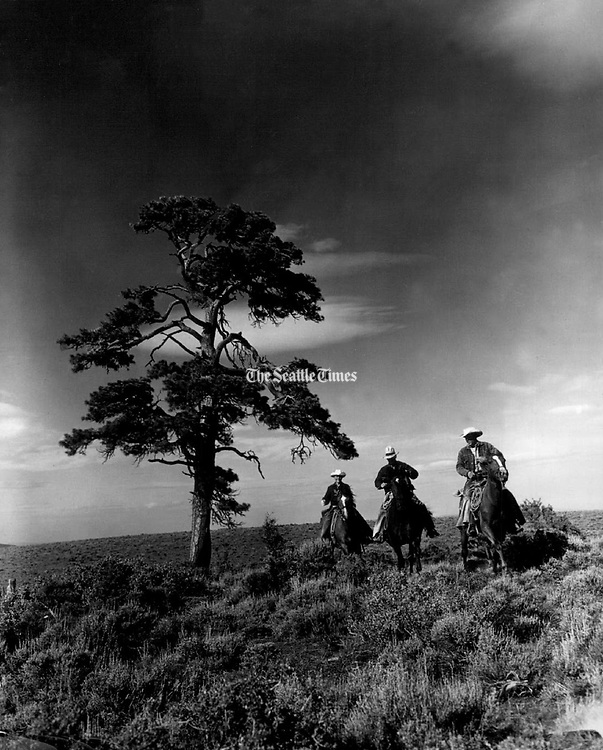With their cattle secure for the night in corrals near a rugged pine tree in the hills northeast of Ellensburg, three riders return to their cabin for dinner. (The Seattle Times, 1956)
