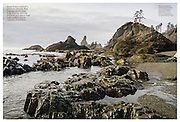 Audubon: Sea Otters (January 2014)