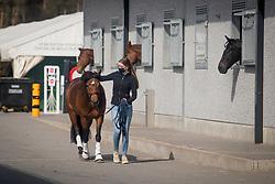 Van Hemert Tessa, NED, Million Dollar Girl <br /> CDI3* Opglabbeek<br /> © Hippo Foto - Sharon Vandeput<br /> 24/04/21