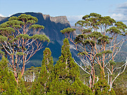 Mountains and Snow Gums (eucalyptus trees) rise above the Overland Track, in Cradle Mountain-Lake St Clair National Park, Tasmania, Australia. The Tasmanian Wilderness was honored as a UNESCO World Heritage Site in 1982, expanded in 1989. The famous Overland Track features mountains, temperate rainforest, wild rivers, alpine plains, abundant birds, and other wildlife. Mostly native to Australia where they dominate the tree flora, Eucalyptus is a diverse genus of flowering trees (and a few shrubs) in the myrtle family, Myrtaceae. Many are known as gum trees because of copious sap exuded from any break in the bark. The most extensive dolerite formations in the world dominate the landscape of Tasmania, where magma intruded into a thin veneer of Permian and Triassic rocks over perhaps a million years during the Jurassic breakup of supercontinent Gondwana in the Southern Hemisphere, forming vast dolerite/diabase sills and dike swarms. (North American geologists use the term diabase instead of dolerite to refer to the fresh, unaltered rock.)