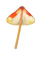 saffrondrop bonnet<br /> Mycena crocata