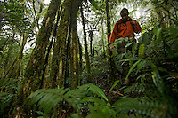 Hiking through the misty montane forest of the Arfak Mountains, New Guinea.