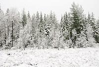 bog edge in Kitsap Peninsula Puget Sound lowlands snow