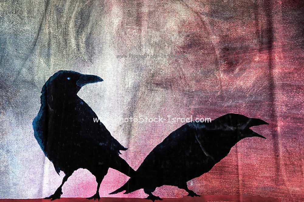 silhouette of two crows