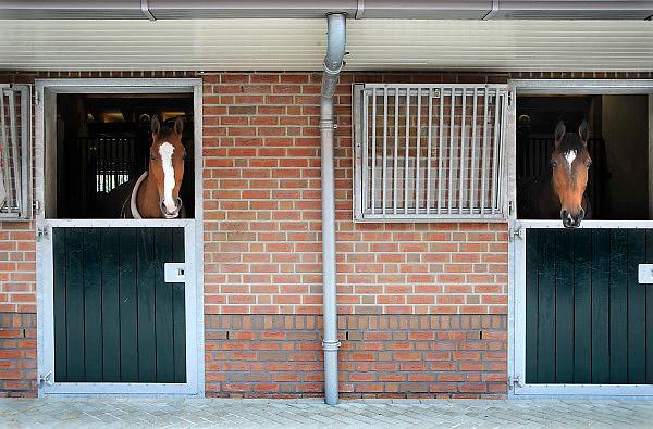Nederland, Stegeren, 27-5-2010Examendag voor jonge fokpaarden op een grote manege.Deze paarden worden verhandeld en getraind om wedstrijden te doen.Foto: Flip Franssen/Hollandse Hoogte