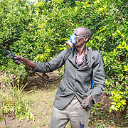 CAPTION: Christopher Onyimo lives in the parish of Apapai in Uganda's district of Kaberamaido, where he owns a three-acre farm. Through World Renew's partner the Kaberamaido Mission Development Program, he learnt conservation agriculture and swiftly put this into practice on his farm. Here, we see him spraying his orange trees with pesticide. LOCATION: Apapai Parish, Otuboi Sub-county, Kalaki County, Kaberamaido District, Uganda. INDIVIDUAL(S) PHOTOGRAPHED: Christopher Onyimo.