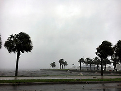 Palm trees on Lake Monroe blow in the wind brought by Hurricane Matthew on Friday, Oct. 7, 2016 in Sanford, Fla. Photo by Jacob Langston/Orlando Sentinel/TNS/ABACAPRESS.COM