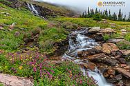 Alpine wildflowers along Oberlin Creek in Glacier National Park, Montana, USA